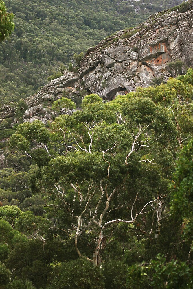 Grampians National Park, Victoria by Marty Samis