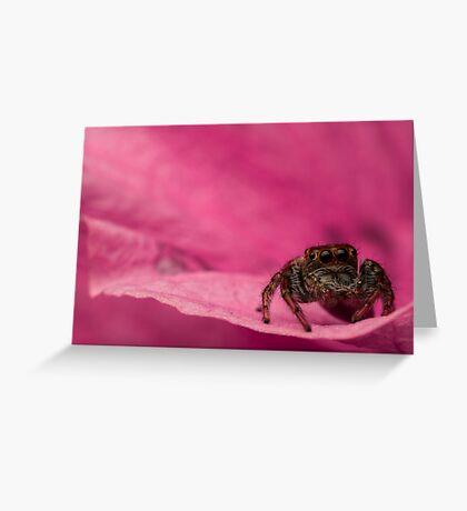 (Servaea vestita) Jumping Spider On Flower #2 Greeting Card