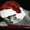 Exquisite Christmas Images of Our Pets