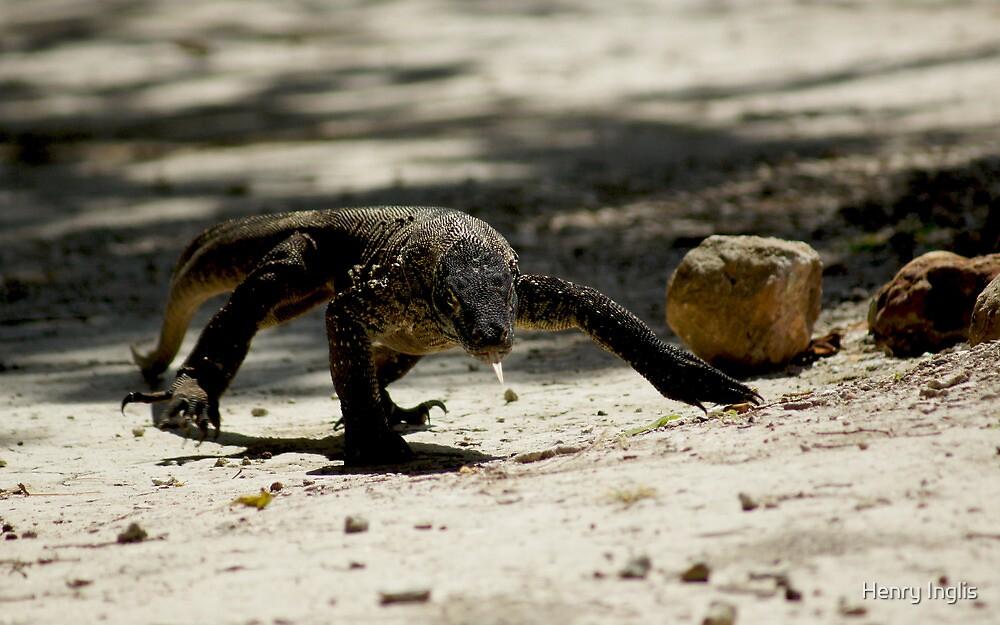 Juvenile Komodo Dragon ~ Rinca Island by Henry Inglis