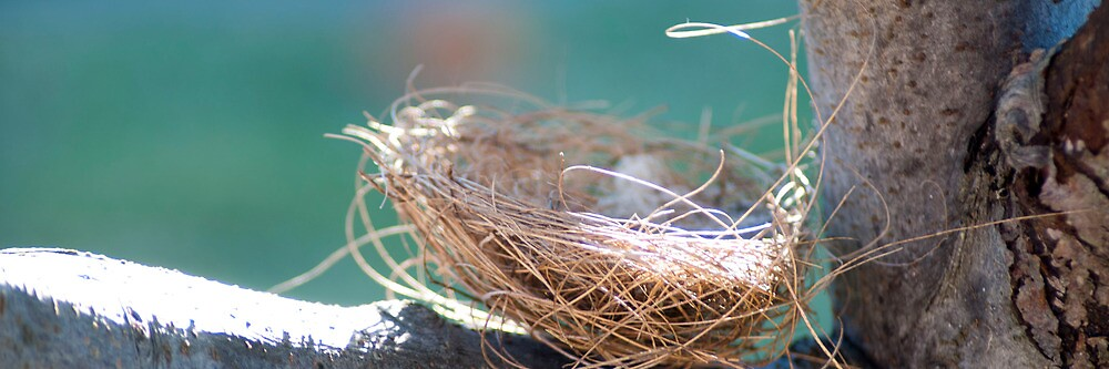 Nest by Yincinerate