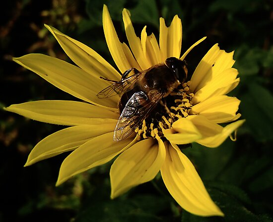 Making Honey by Richard Ion