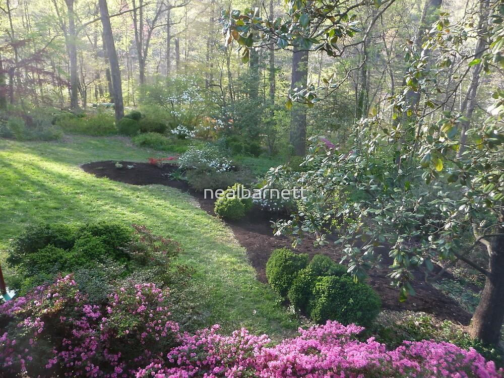 Azalea season starts by nealbarnett