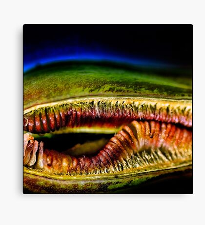 The big mouth! Canvas Print