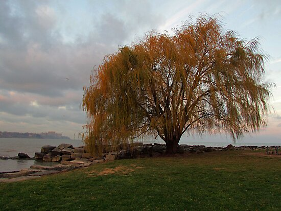 My Favorite Tree by Nevermind the Camera Photography