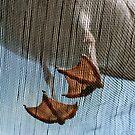 Seagull Feet by Lisa  Kruchak