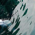 Dolphin by Lisa  Kruchak