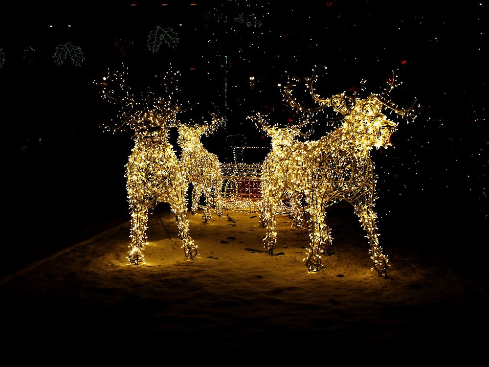 Reindeer 2 by illman
