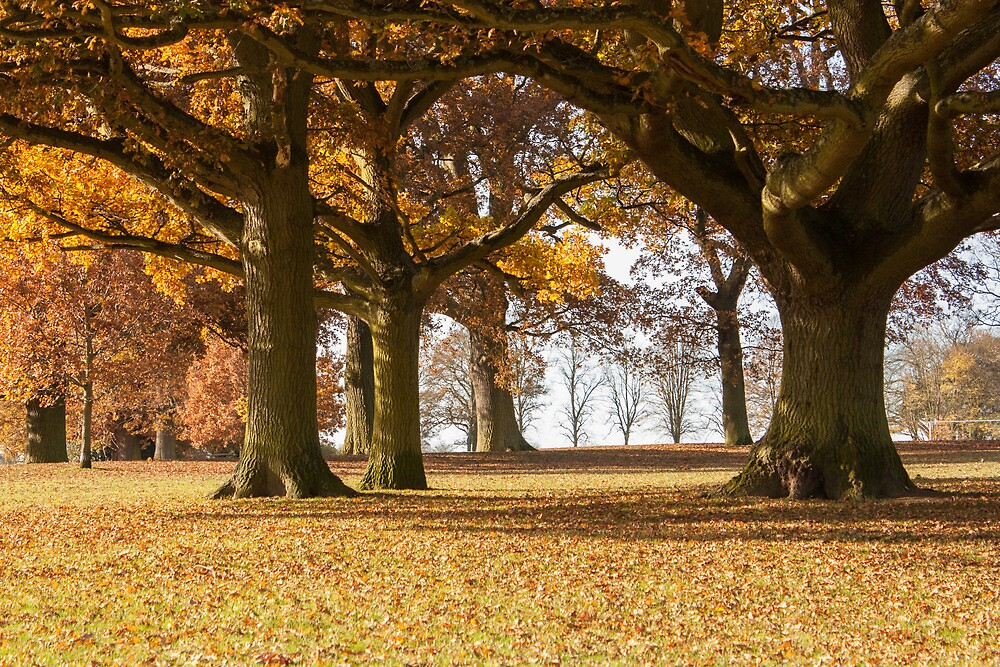 Under the Autumn Canopy by Rosej58