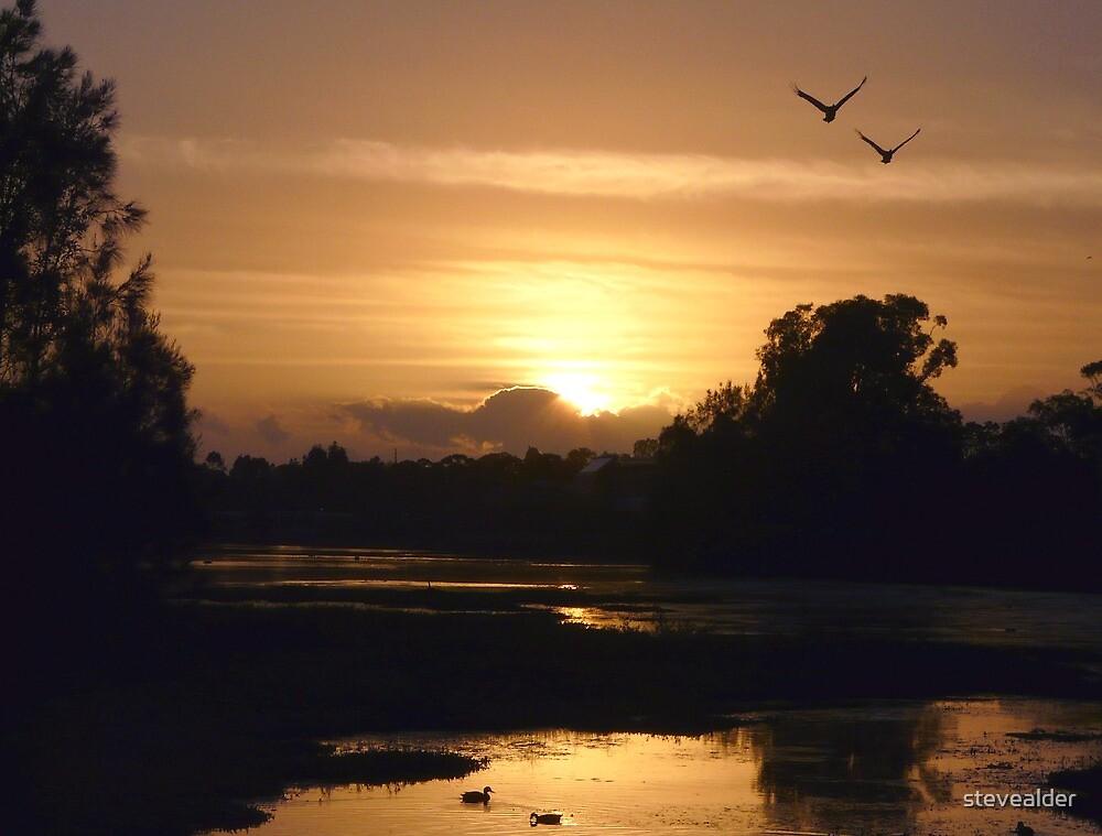 Another Golden Sunrise by stevealder