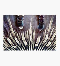 Zebra Anemone Photographic Print