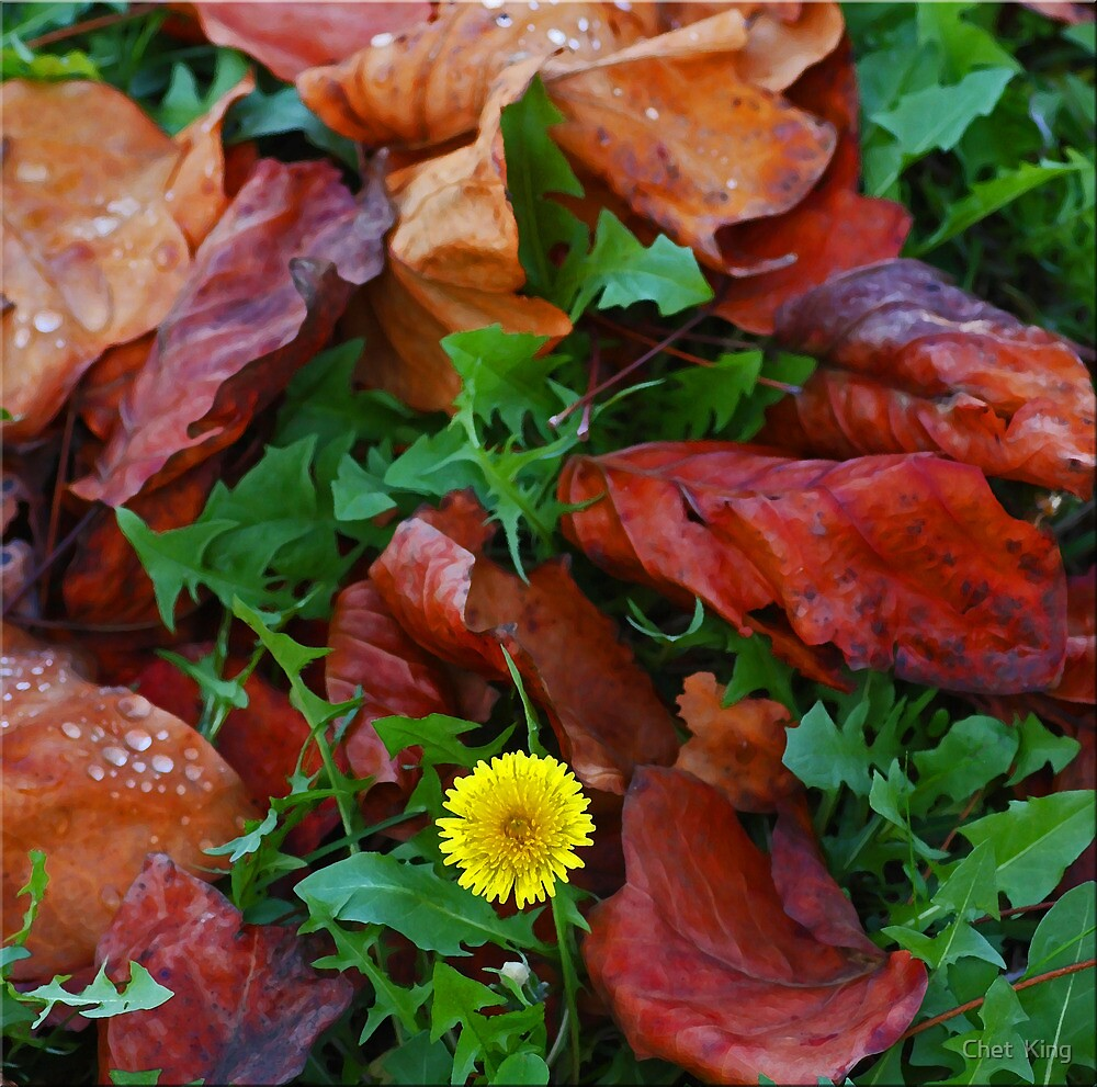 Fallen Leaves And Dandelion by Chet  King