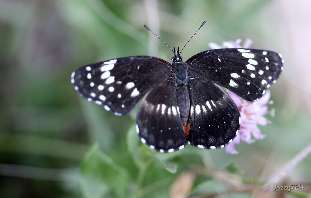 White Admiral by Jazzy724
