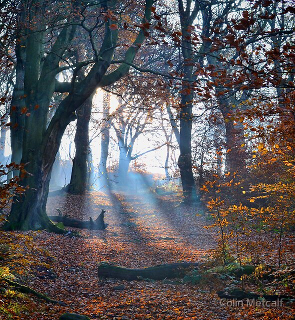 Chevin Forest Park #2 by Colin Metcalf