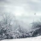 Silent Snow by Jessica Jenney