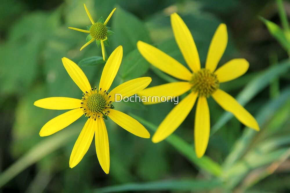 Yellow Coneflower by Docharmony