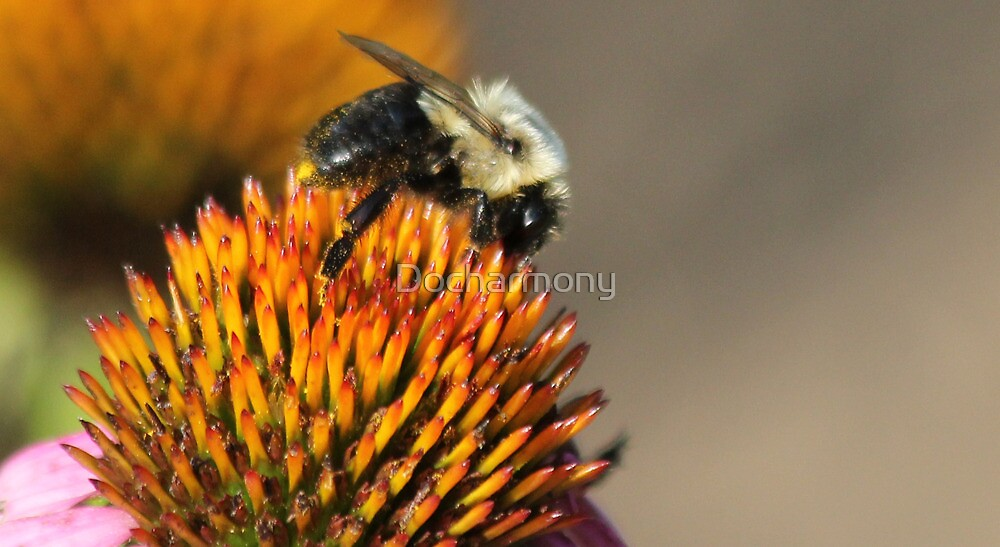 Bumble Bee at Work by Docharmony