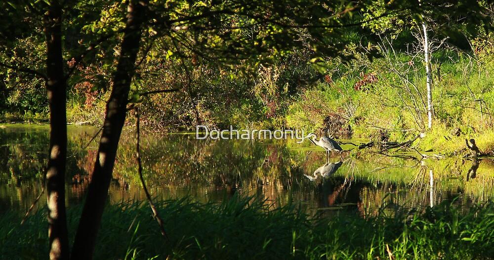 Great Blue Heron Reflecting by Docharmony