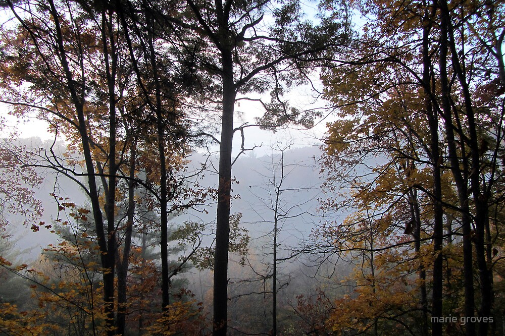 Autumn Morning Mist by marie groves
