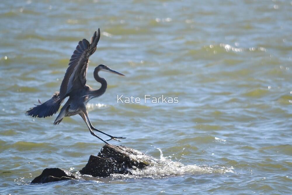 Heron landing by Kate Farkas