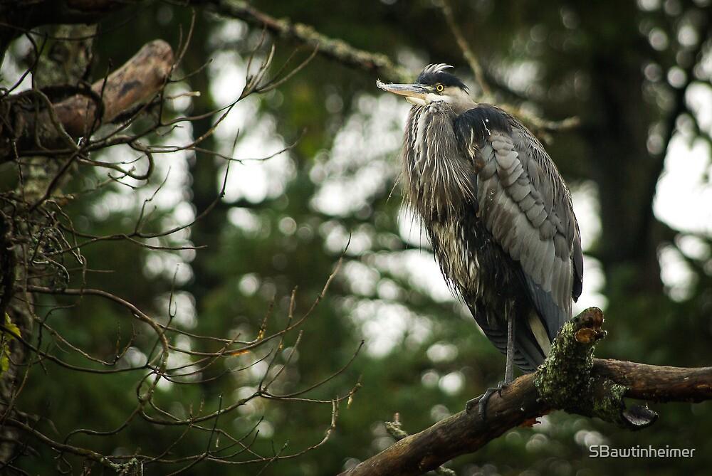 Great Blue Heron by Sheri Bawtinheimer