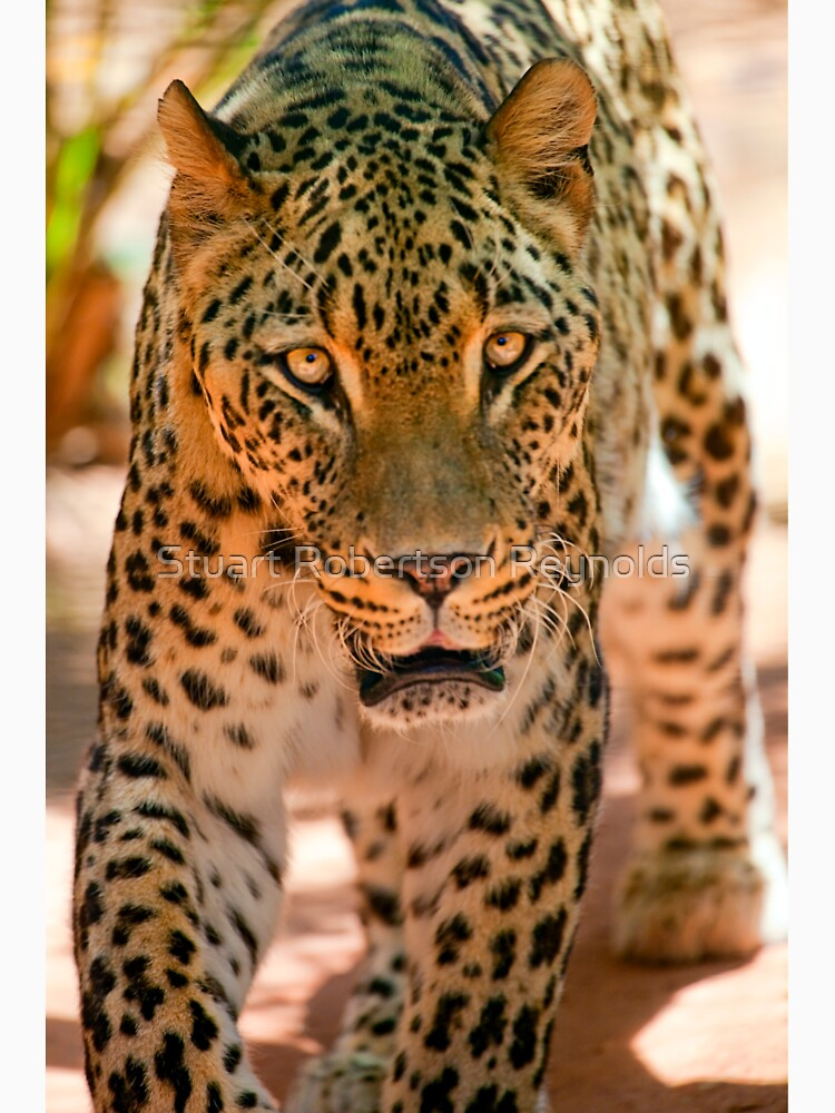 Persian leopard by Sparky2000