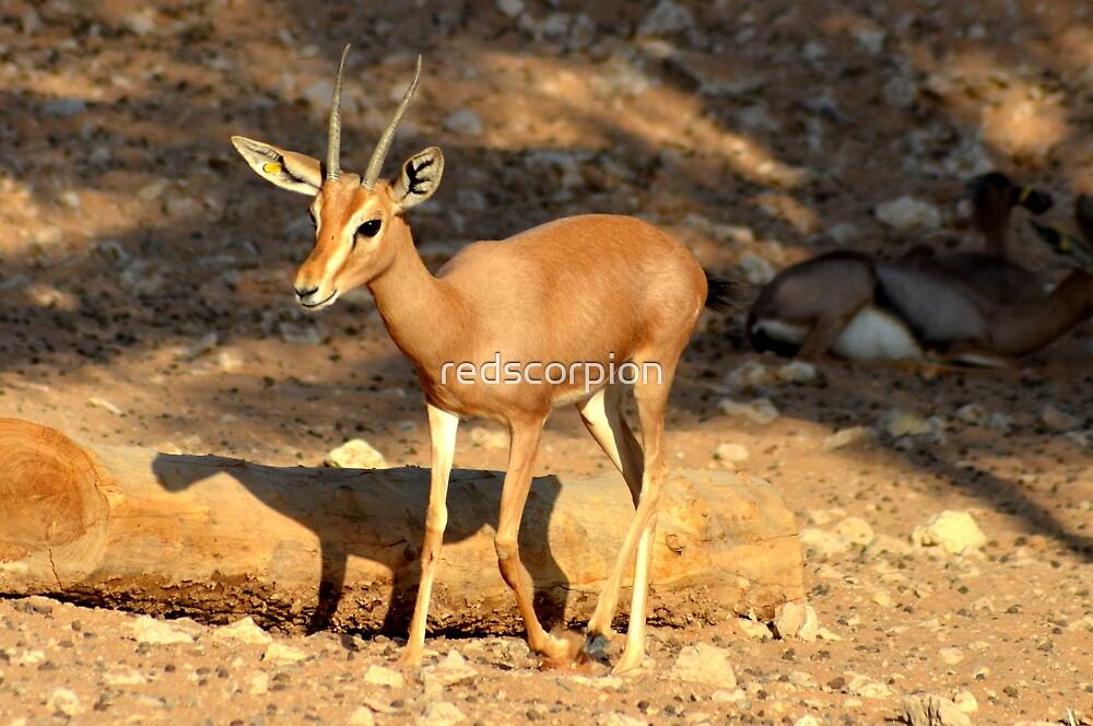 Doe, a deer by redscorpion