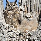 Great Horned Owl and Owlet by pjwuebker