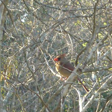 Female Cardinal Bird Camouflage by LittleCsDesigns