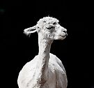 Snooty Alpaca. by Alex Preiss