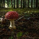 Hushrooms #8887HJ by Charles & Patricia   Harkins ~ Picture Oregon