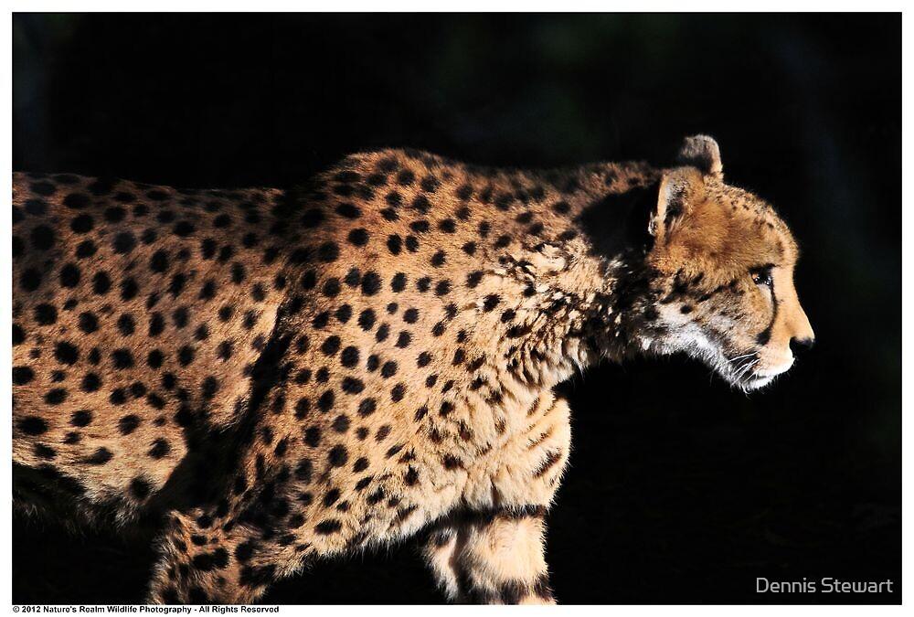 Cheetah Profile by Dennis Stewart