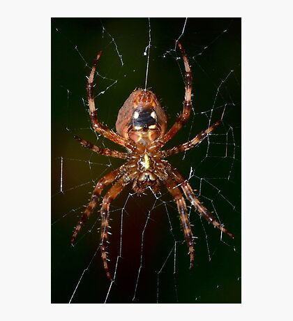 Orb Weaver 1 Photographic Print