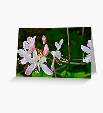 Flowers in Spring Greeting Card