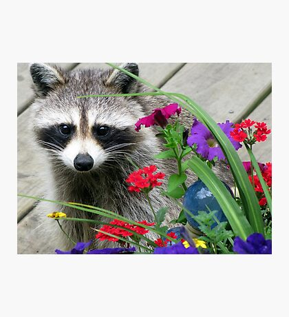 Sweets With Flowers Photographic Print