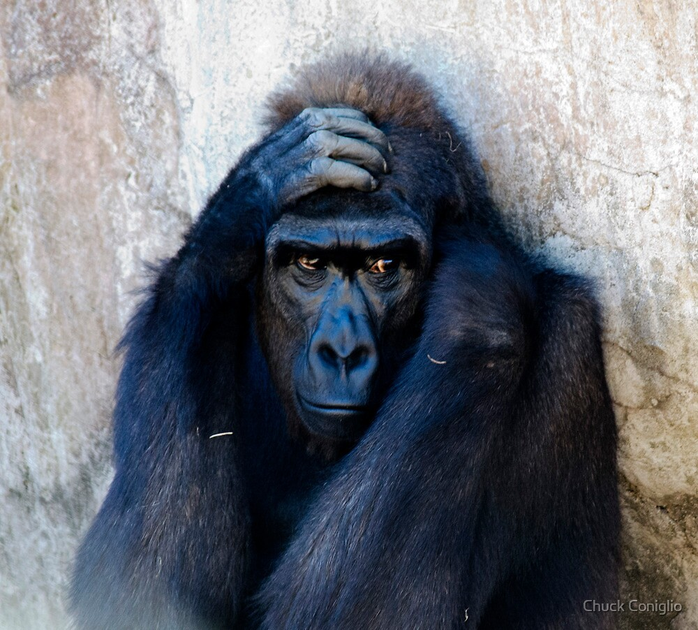 I  Don't Like the Zoo by Chuck Coniglio