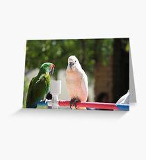 Birds in San Diego Greeting Card