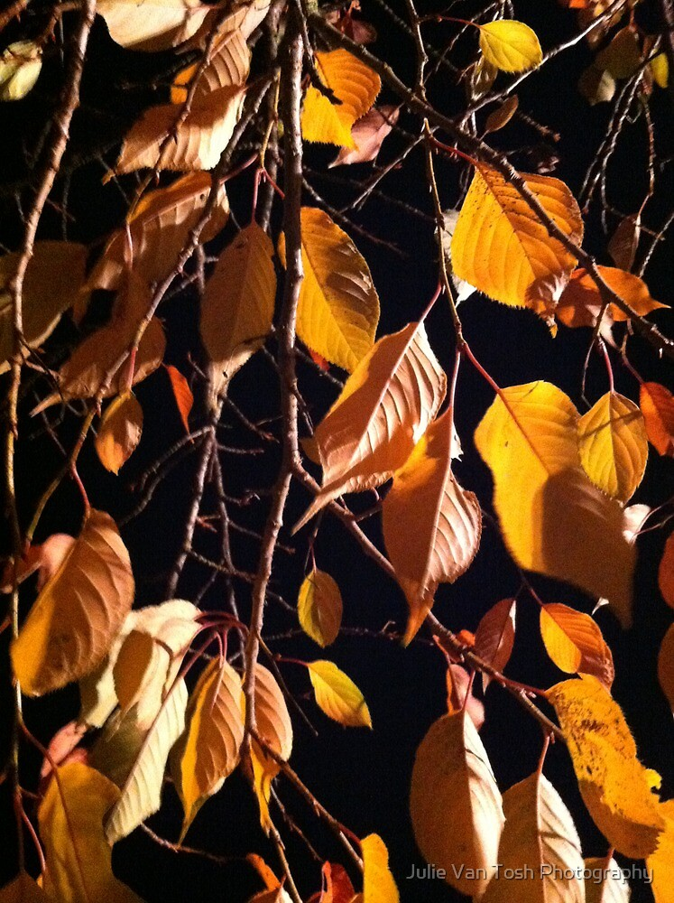 Leaves at night by Julie Van Tosh Photography