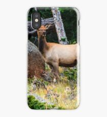 Young Elk iPhone Case