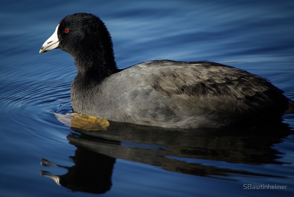 Handsome Old Coot by Sheri Bawtinheimer