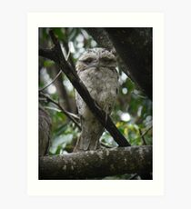 Tawny Frogmouth Chick Art Print