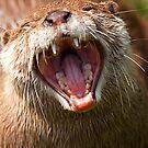 Yawn by Stuart Robertson Reynolds