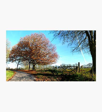 Autumn Lane Photographic Print