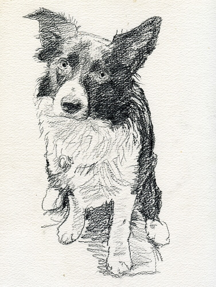 Drawing of Indy by Michael Haslam