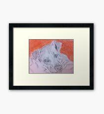 Cuddle? Framed Print