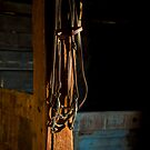 Bridle in Stable by Armando Martinez
