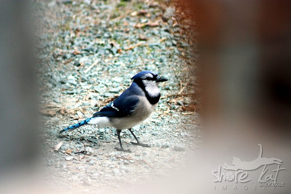 Blue Jay Way by shorekat