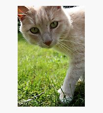 Sirius Cat Photographic Print