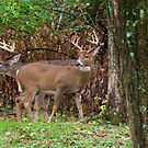 Backyard Bucks by Ron Russell