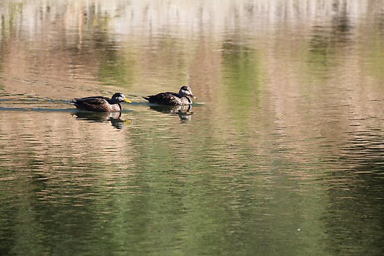 Mallards in Motion by Bob Hardy